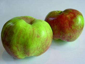 APPLE Oratia Beauty